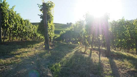 Votre voyage viticole sur mesure